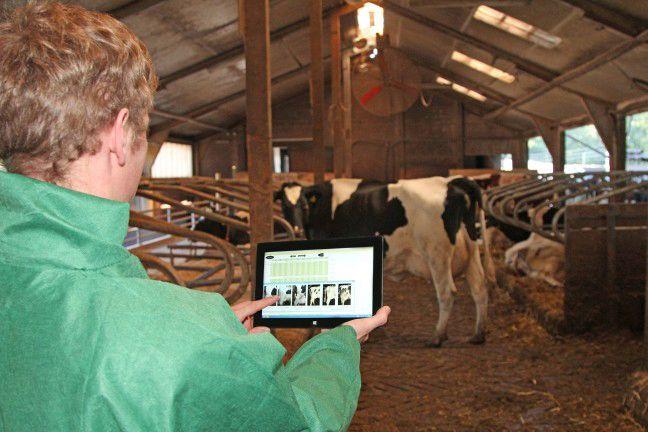 Digitale Stallarbeit: Mithilfe der Software werden Verhaltensprofile der Kühe erstellt und so die Haltung optimiert. Foto: Ludger Bütfering