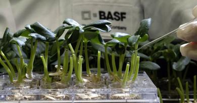 Foto: BASF SE