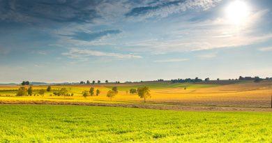 Klima: Flächendeckende Bio-Landwirtschaft nicht sinnvoll