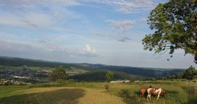Spiegelwald im Erzgebirge. Foto: Regionalmanagement Erzgebirge (Symbolbild)