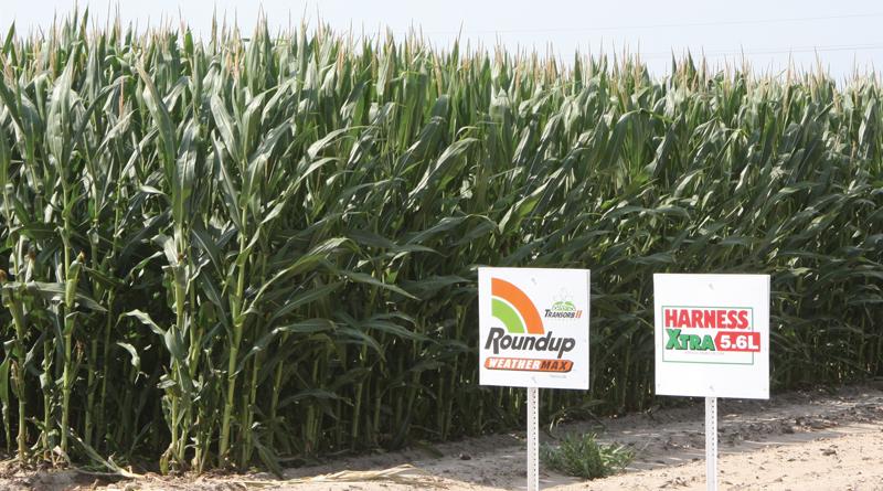 Foto: Monsanto