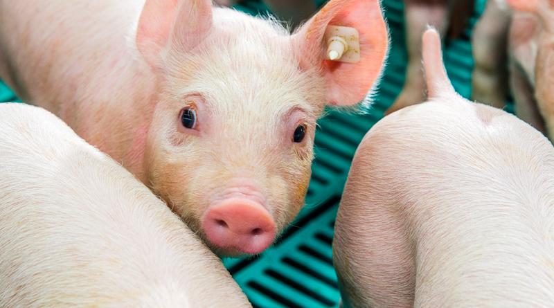 Initiative Tierwohl übernimmt Kosten für Bestandschecks