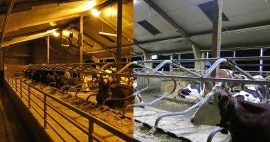 Steigerung des Tierwohls durch innovative LED-Leuchten