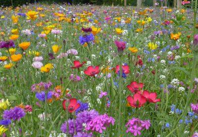 """"""" Aktionsprogramm Insektenschutz """": Veränderungen für Landwirte"""