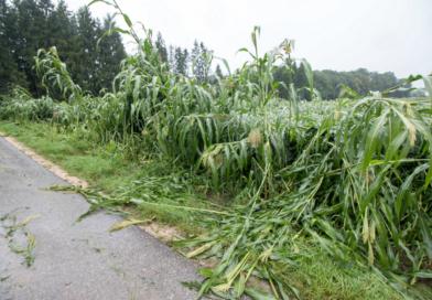 Wettergefahren: Experten informieren auf der MeLa über Risikomanagement