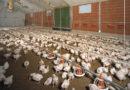 Überbevölkerung: Nahrungssicherung durch Insekten in Futter