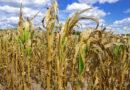Agrarwetter: Mehrgefahrenversicherungen schützen vor der Liquiditätsfalle
