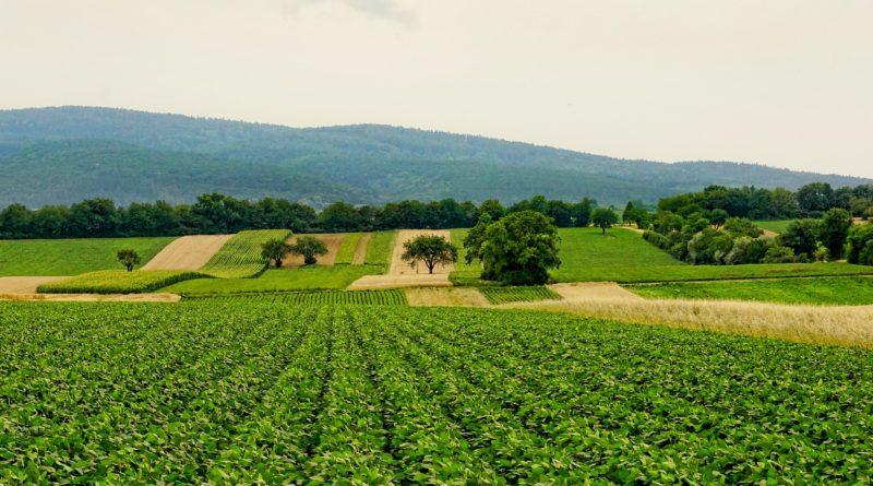 agrarstruktur