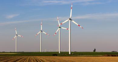 Insektensterben: Sind Windräder mitverantwortlich?