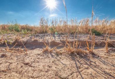 Dürre 2019? Sachsen-Anhalts Agrarministerin lehnt schon jetzt Hilfe ab
