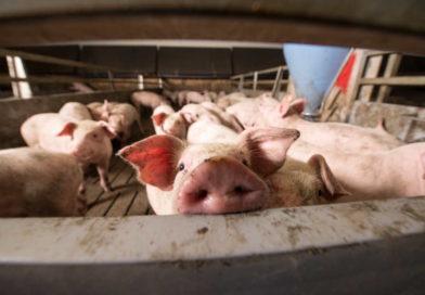 Tierwohl soll deutschlandweit erfasst werden