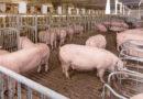 Tierwohl: Bundeskabinett verabschiedet Gesetzesvorhaben