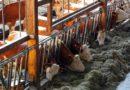 Tierwohl: Baurecht wird vereinfacht
