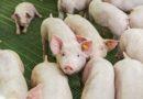 Nutztierhaltungsverordnung: Bundesrat hat Abstimmung verschoben